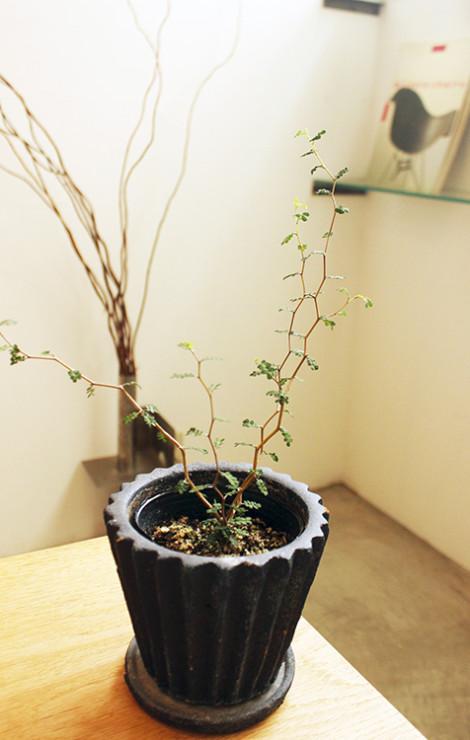 uchimari-blog184